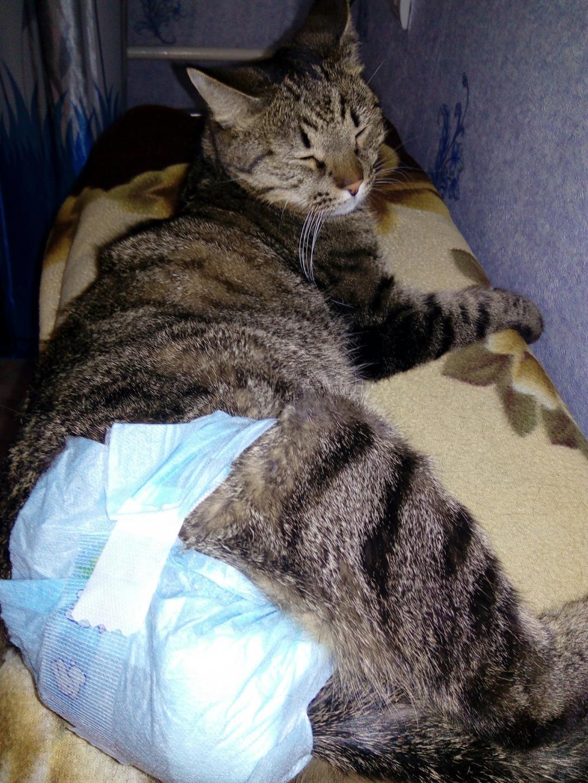 Лечебные ветеринарные корма для кошек: показания к применению, обзор лучших марок, отзывы ветеринаров и владельцев