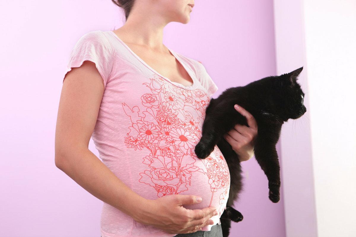 Почему беременным нельзя гладить кошек: мистические и научные объяснения