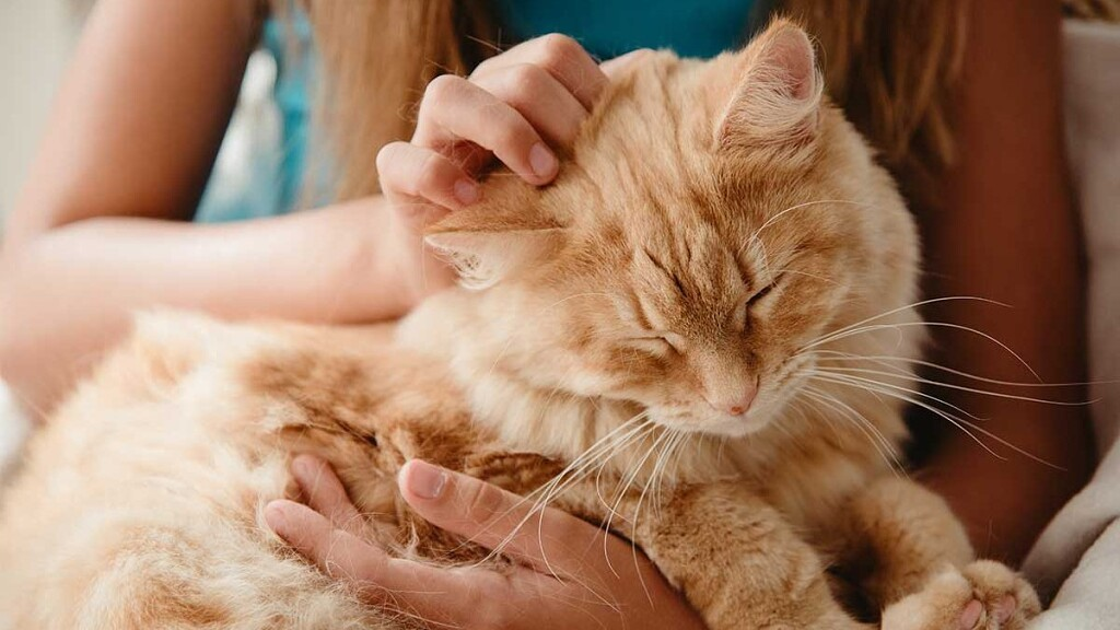Почему кошка не сидит на руках?