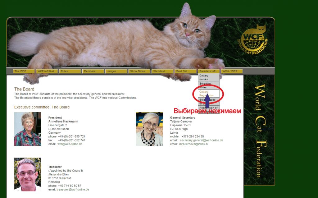 Титулы кошек по системе wcf - всемирная федерация кошек (would cat federation)