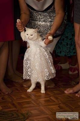Свадебные церемонии для домашних питомцев | идеи для свадьбы