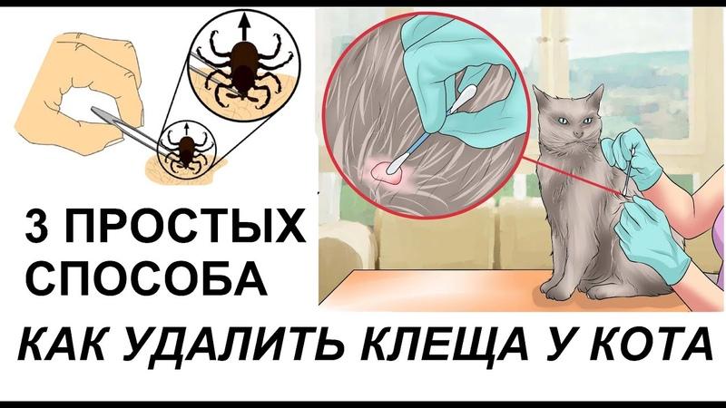 Как вытащить клеща у кошки в домашних условиях