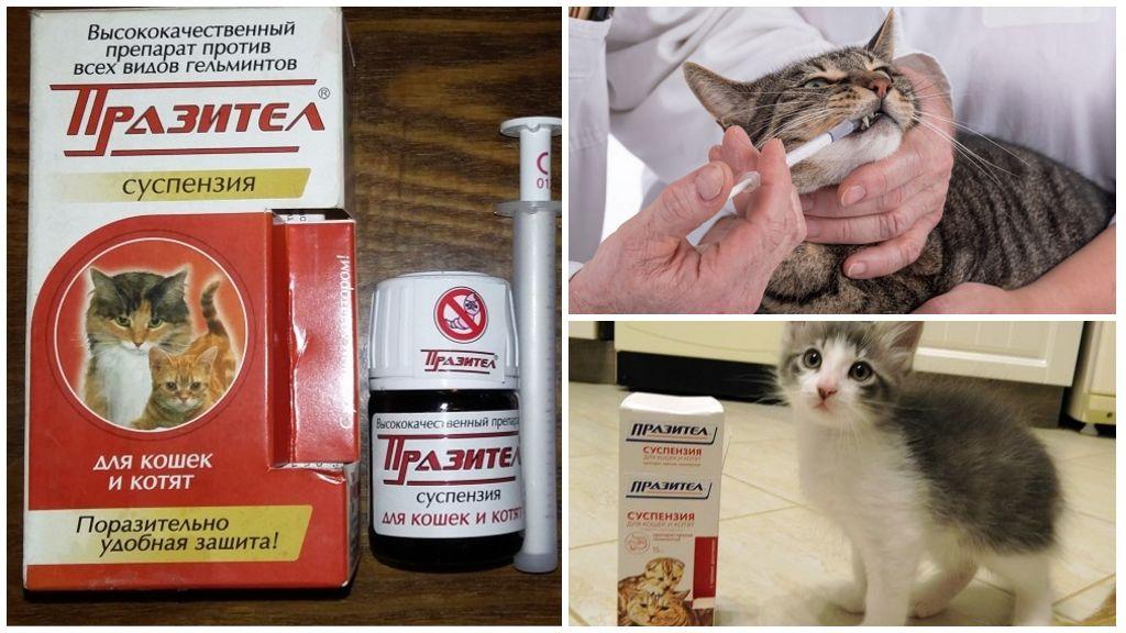 Пиперазин для кошек: показания и инструкция по применению, отзывы, цена