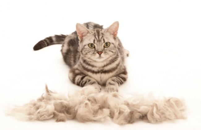 Как пользоваться фурминатором для кошек?