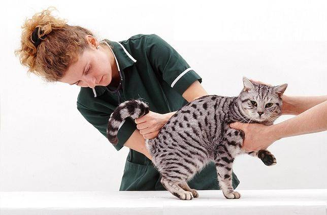 Мочекаменная болезнь у кошек: как диагностировать и лечить недуг