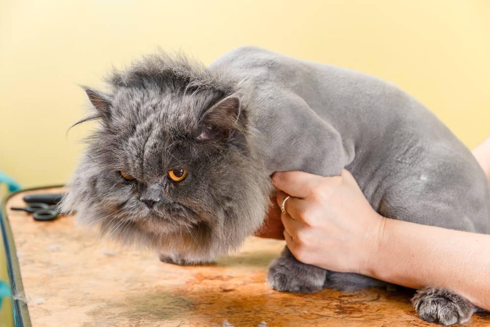 Стресс у кошек: причины, симптомы, лечение стресс у кошек: причины, симптомы, лечение