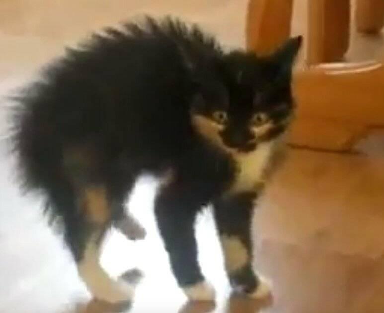 Почему кошка всего пугается, боится хозяина и постоянно прячется, что делать: причины слишком тревожного состояния кота
