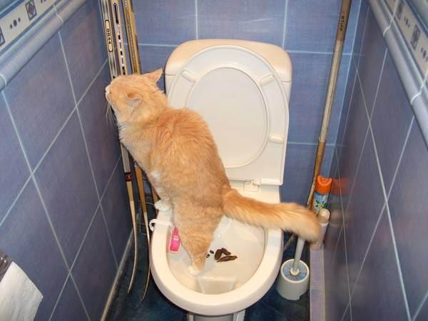 Когда котенок начинают ходить в туалет?