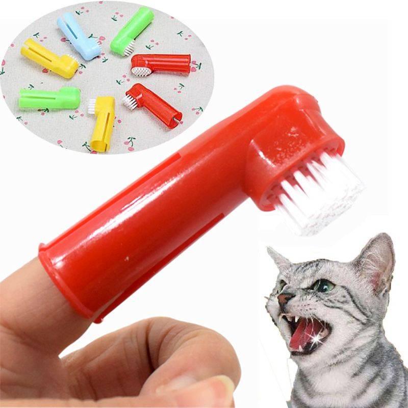 Чистка зубов у кошек ультразвуком, описание средств, специальные щетки, палочки и корм - как провести процедуру в домашних условиях