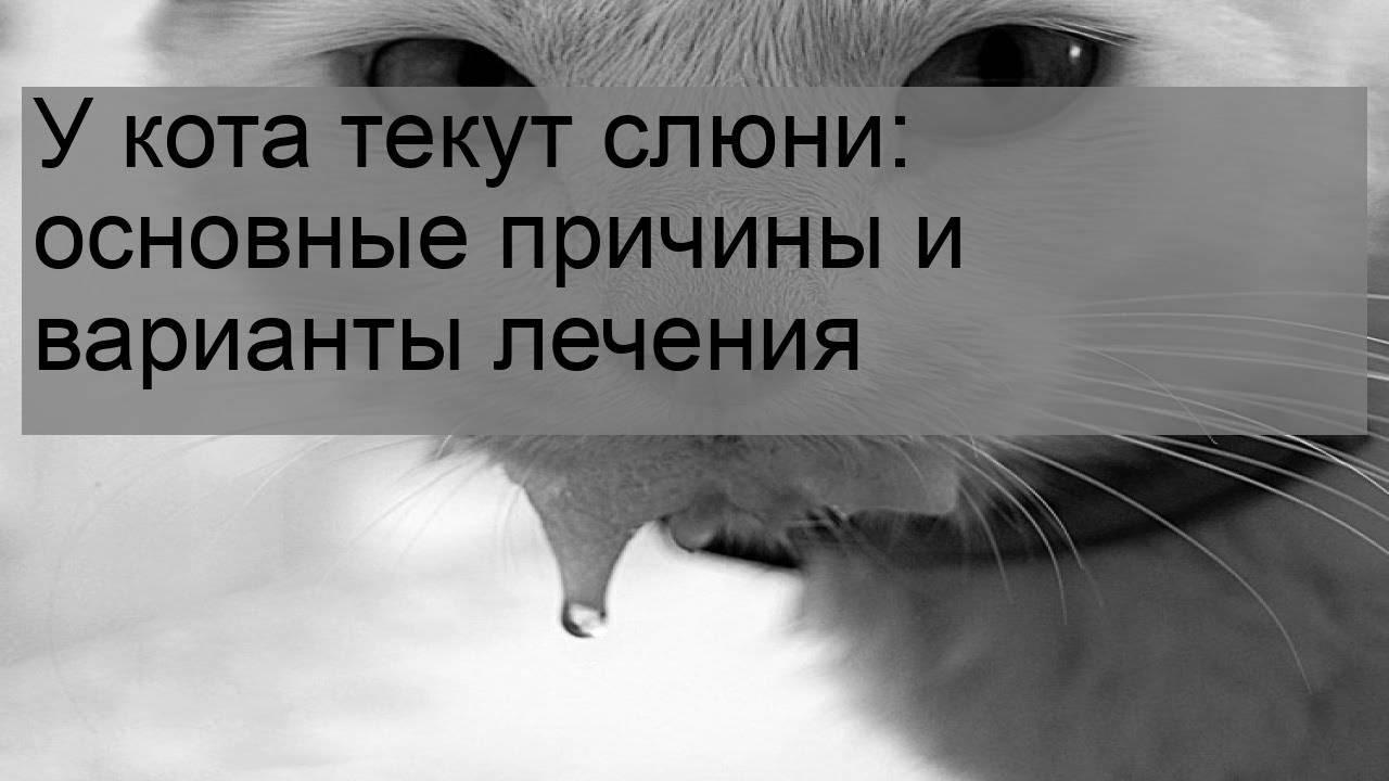 У кота текут слюни изо рта: причины, какие меры предпринять