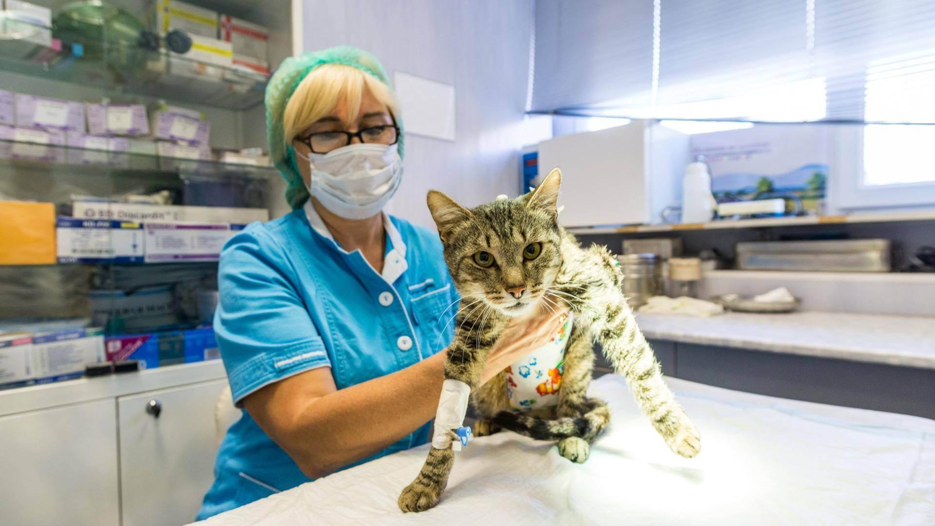 Ветеринар-дерматолог в москве: цены, отзывы и адреса