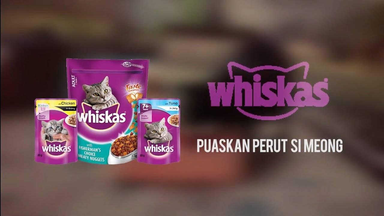 Как отучить кошку от сухого корма вискас, китекет и приучить к нормальной еде