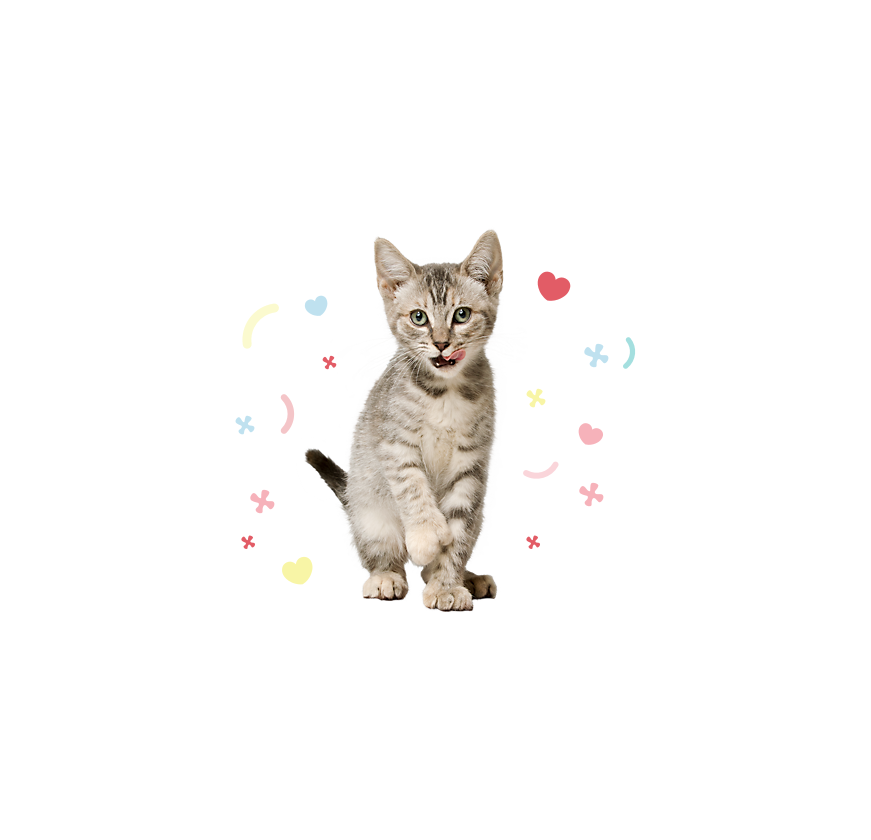 Как правильно кормить кота сухим кормом?
