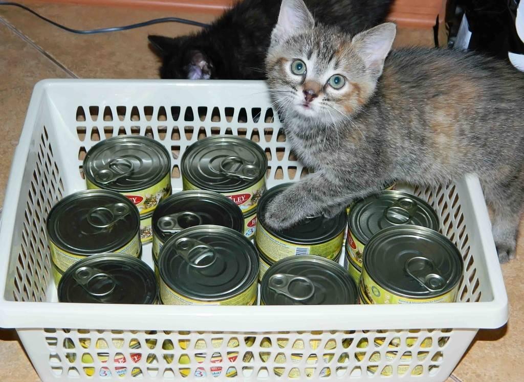 Детское питание для кошек может не подойти?