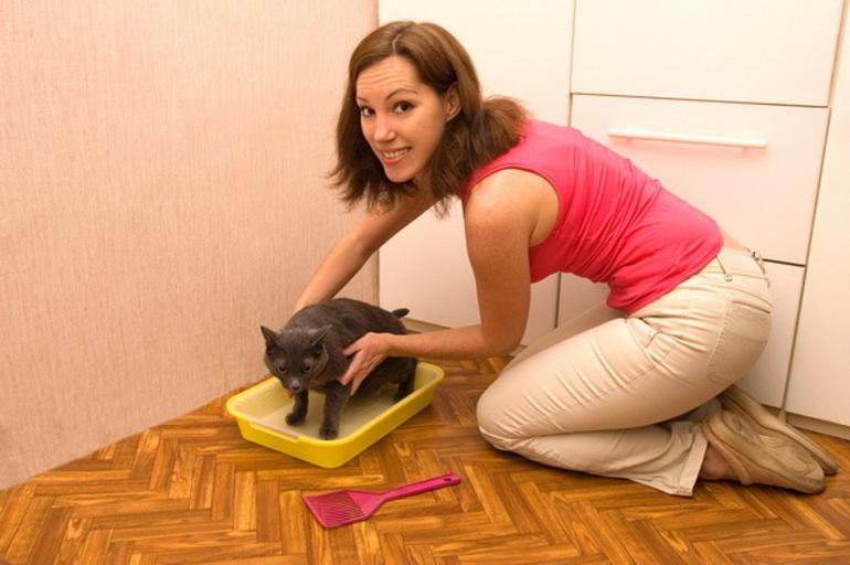 Причины, почему кошка может гадить на кровать