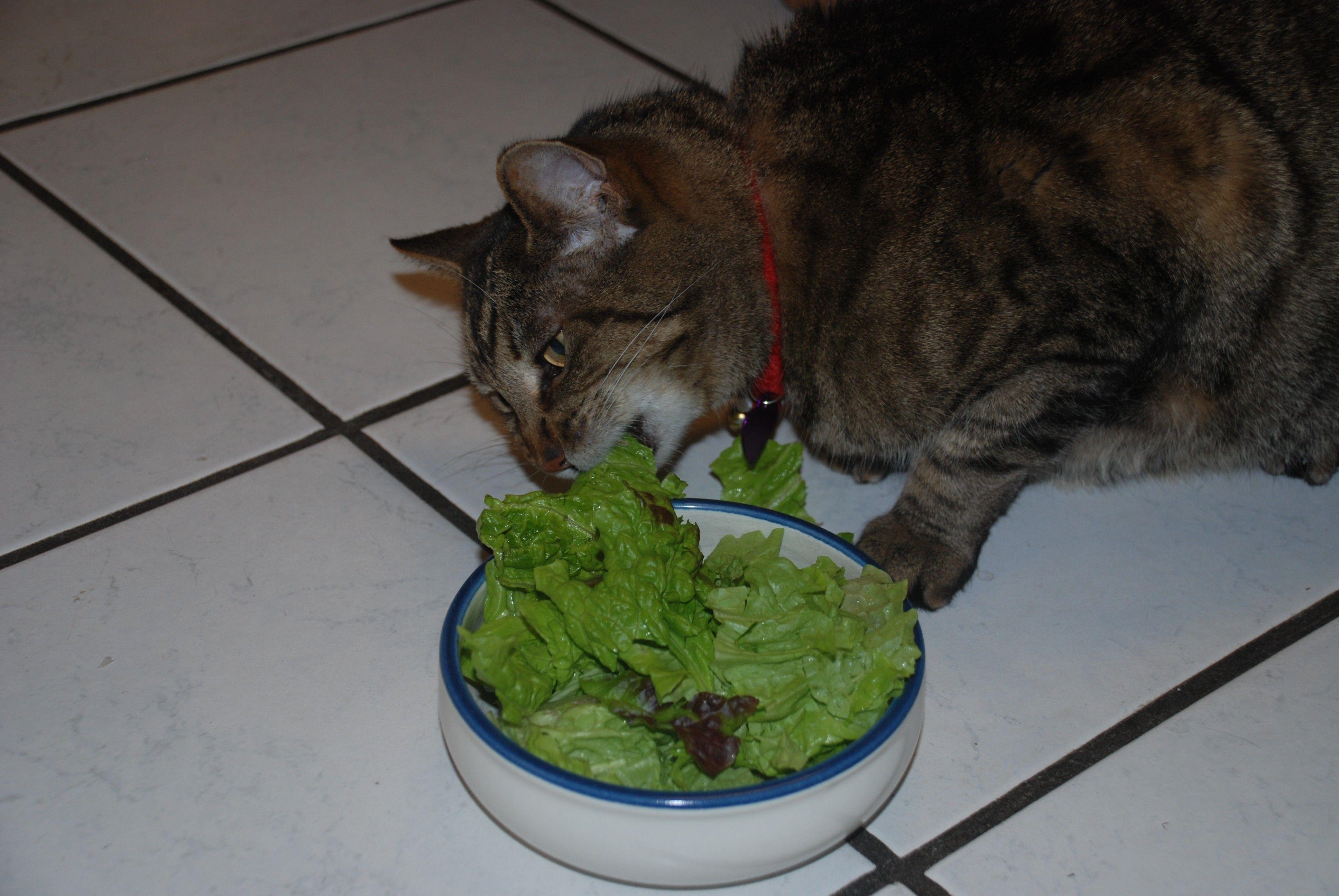 Почему кошка ест землю – 5 возможных причин и способы их устранения