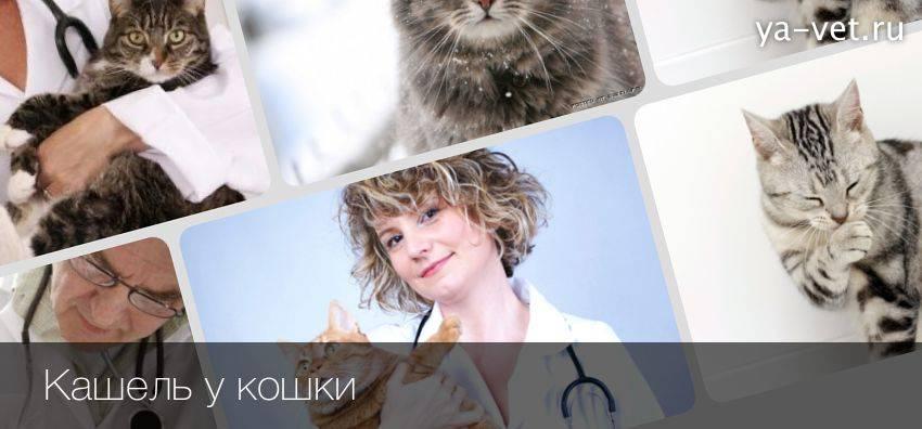 Почему кот или кошка кашляет   что дать от кашля
