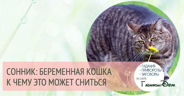 Кошка рожает необычных котят