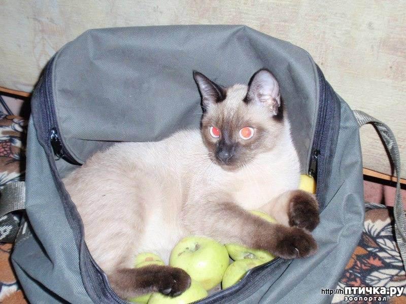 Чем кормить кошку - секреты правильного питания котов