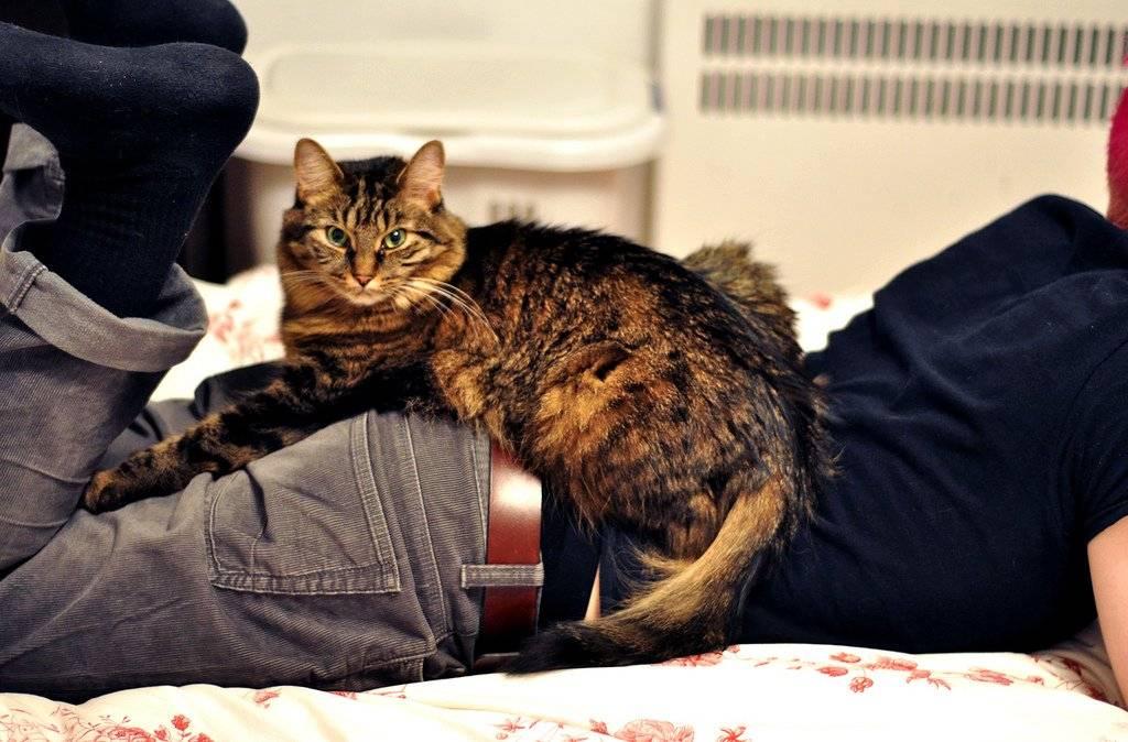 Кот лежит на спине: основные причины и возможные проблемы