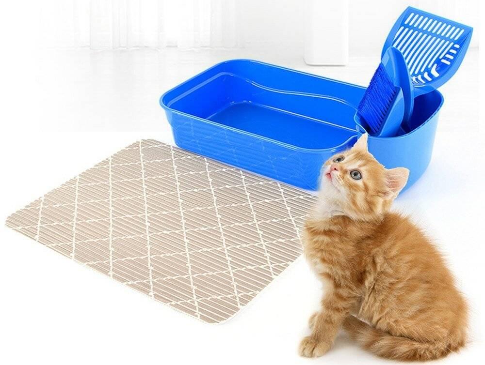 Что делать, чтоб приучить котенка к лотку