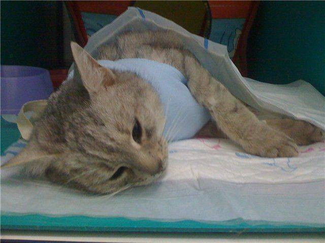 Кошка умерла дома: приметы, что делать