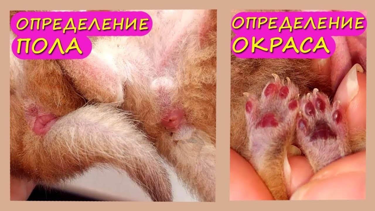 Как понять, что кошка рожает: основные признаки, фото и видео