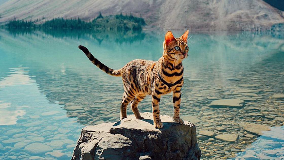 Как путешествовать с кошкой: 14 шагов