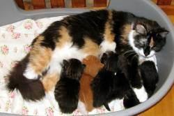 Как помочь кошке в родах - wikihow
