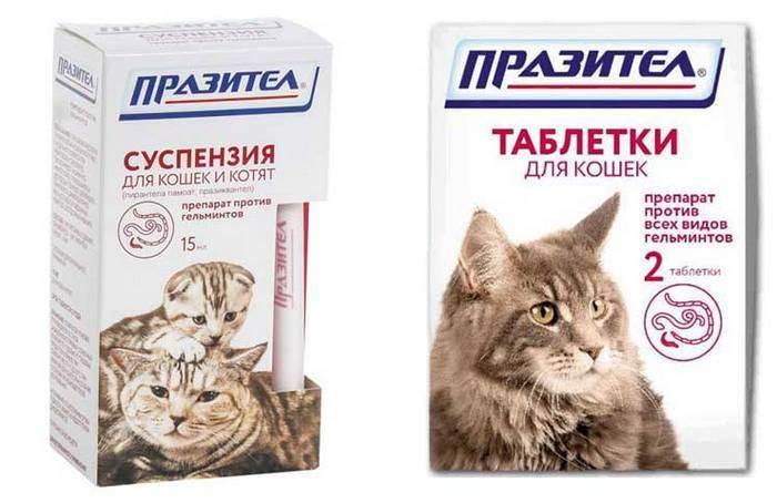 Цестал для кошек : инструкция по применению, показание и противопоказание, отзывы, цена, аналоги