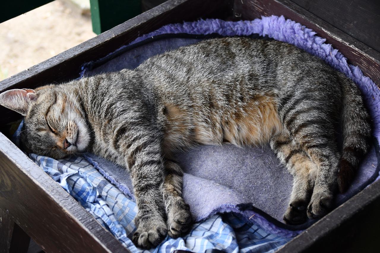 Почему кошки любят спать почему кошки любят спать