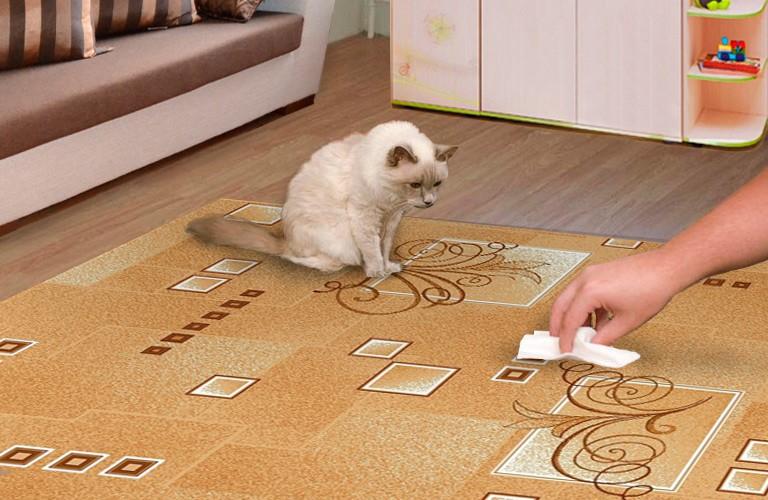 Как вывести запах кошачьей мочи с дивана: 20 средств чем избавиться в домашних условиях