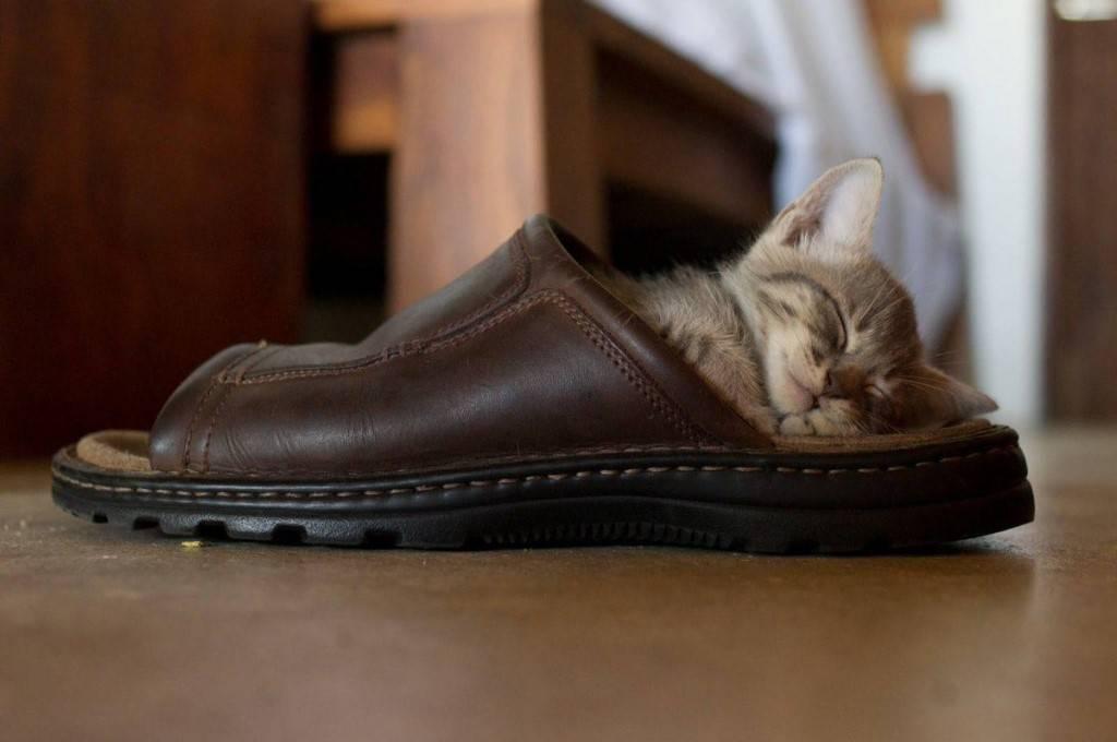 Чем помочь кошке когда она теряет шерсть