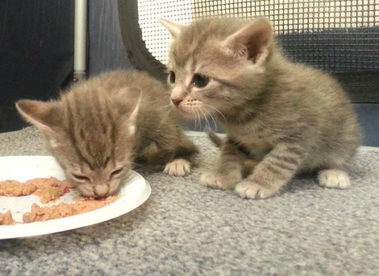 Можно ли кошке давать сырое мясо можно ли кошке давать сырое мясо