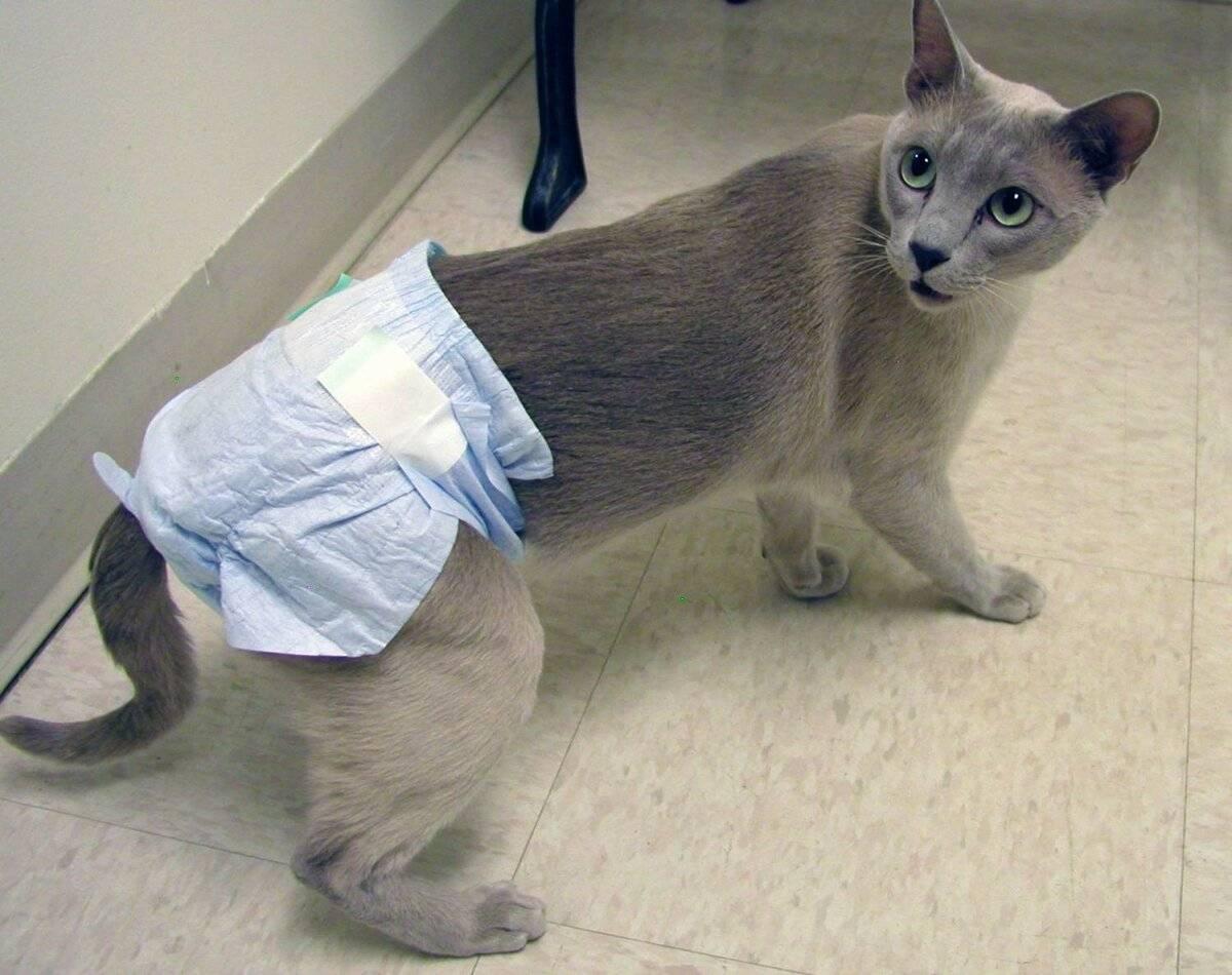 Причины возникновения крови в моче и частых мочеиспусканий у кошки, кота или котенка, диагностика и лечение