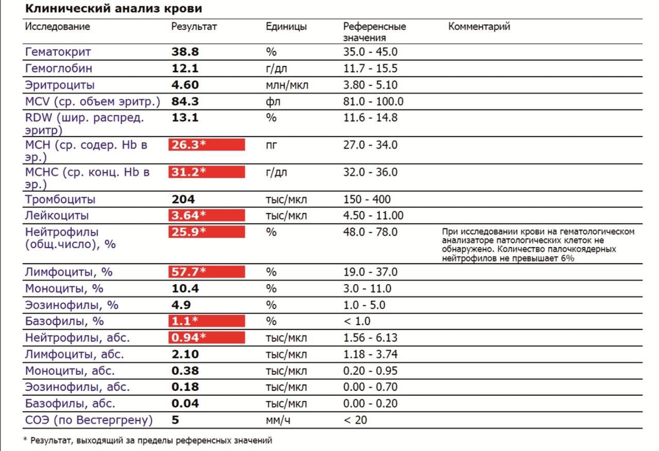Снижение уровня лейкоцитов в крови (лейкопения) у кошек: симптомы, лечение