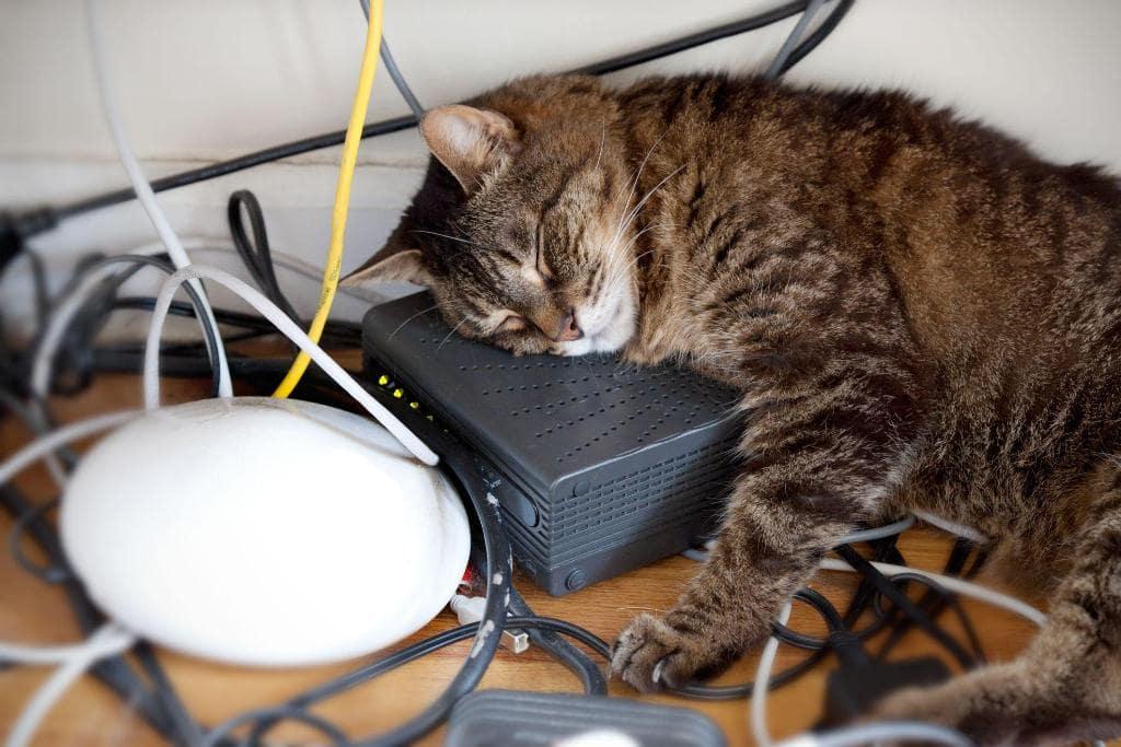 ᐉ как отучить кошку грызть провода? - ➡ motildazoo.ru