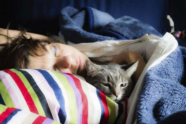 Примета: как спит ваша кошка? когда кот спит на столе, почему кошка спит на человеке?