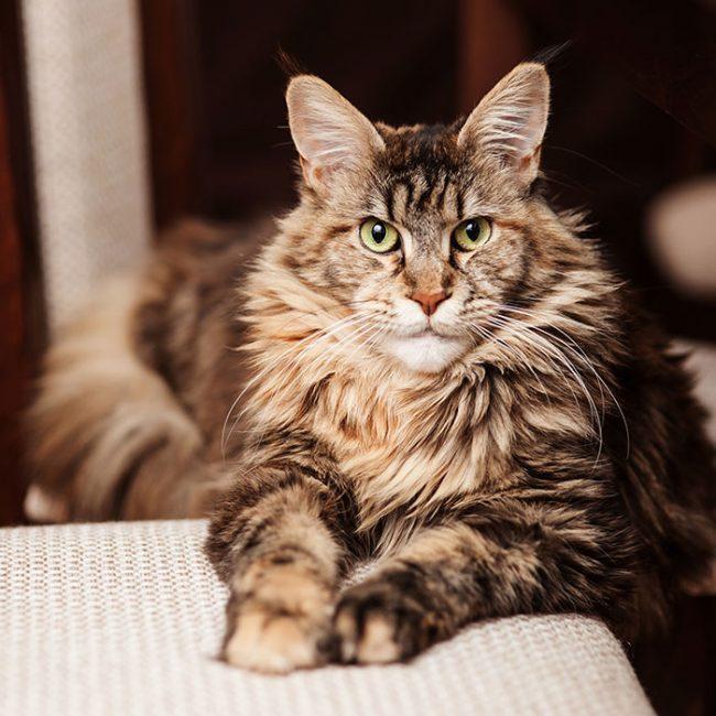 Самые ласковые и добрые кошки: топ-15