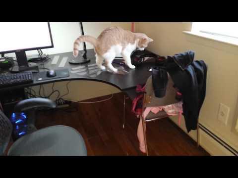 Как отучить кота или кошку лазить на стол: эффективные методы воспитания вашего питомца