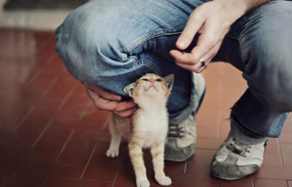 Почему кошки трутся об ноги человека - причины и последствия