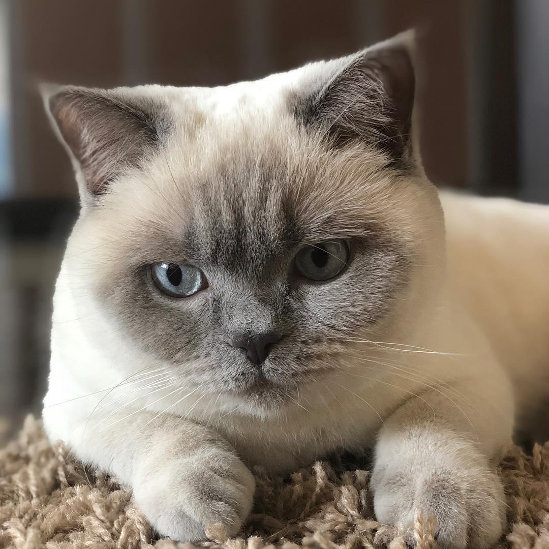 Документы на котенка