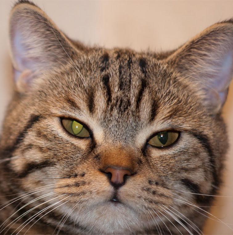 Кошка щурит один глаз или моргает им – почему и что с этим делать?
