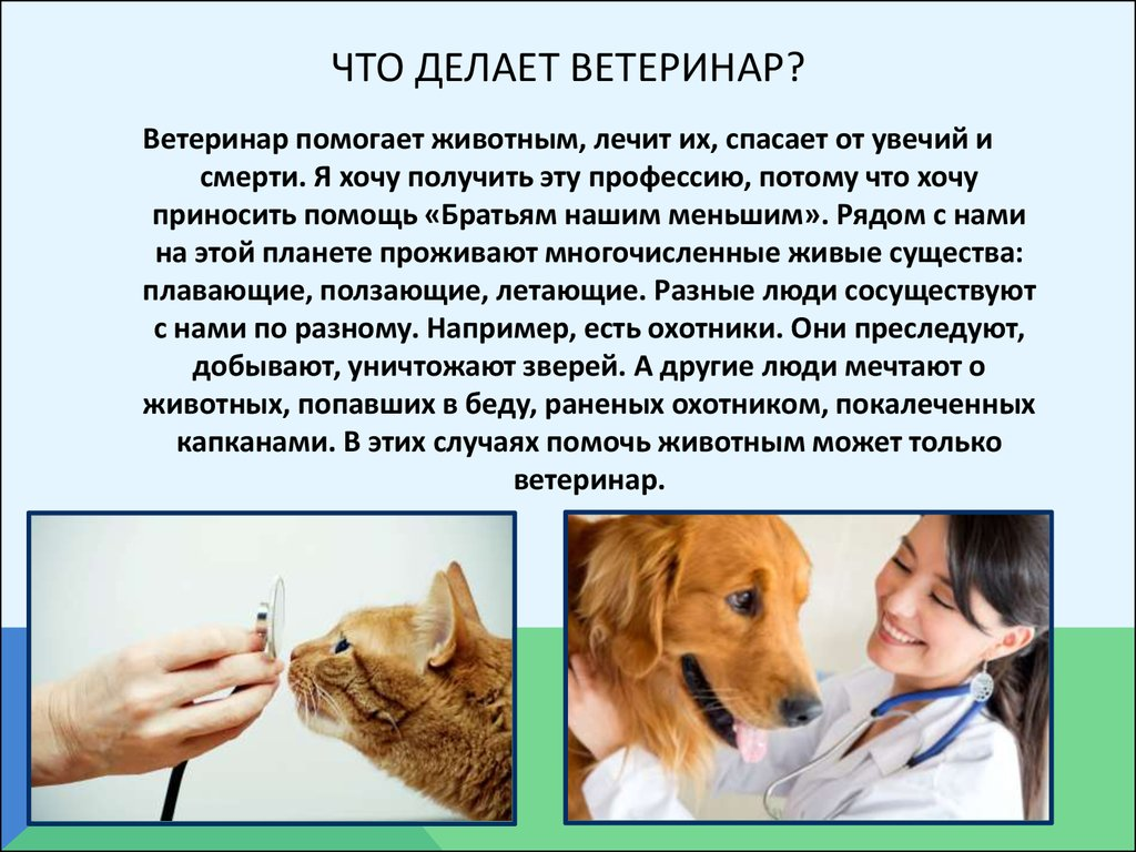 Все о стерилизации кошки