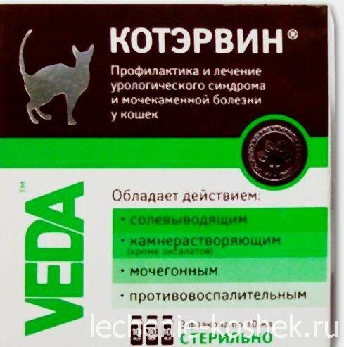 Особенности проявления и пути лечения цистита у кошек