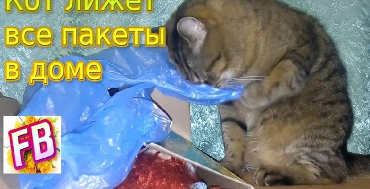 Кошка лижет пакеты?