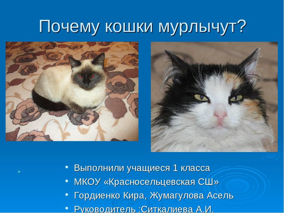 Почему кошки мурлыкают и как они это делают?