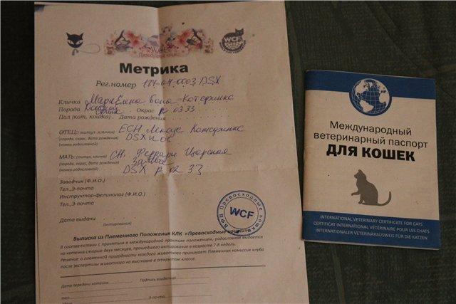 Паспорт для кошки: ветеринарный, международный, для оформления родословной