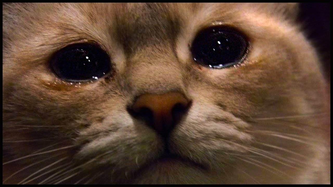 Как понять, что кошка вас любит? топ-10 верных признаков