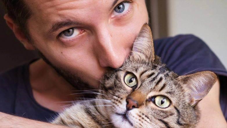 Кошка в доме? это хорошо или плохо?